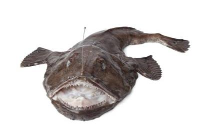 ryby-das