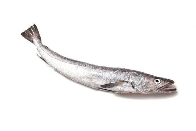 ryby-hejk