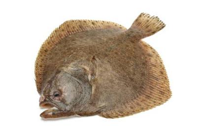 ryby-prazma