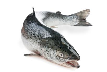 ryby-losos