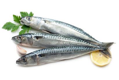 ryby-makrela