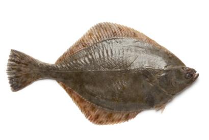 ryby-platyz