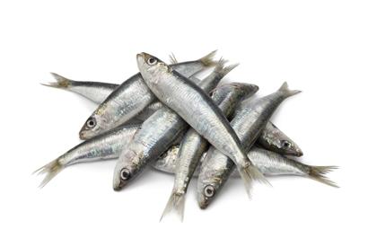ryby-sardinky